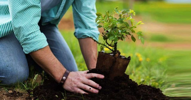 Latest technology being utilized in country for tree plantation drive